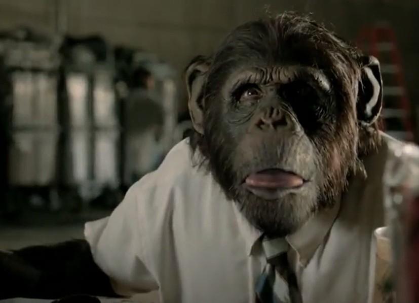 Reklamında hayvanları buluşturan bu kez Adobe oldu
