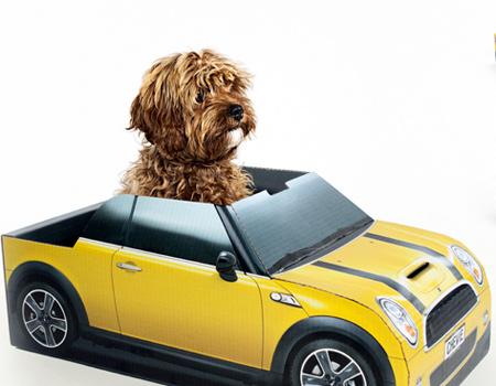 SPCA - Mini Cooper işbirliği sürüyor