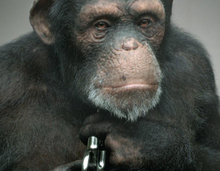 PETA'dan çarpıcı reklam filmi