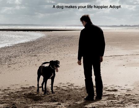 Köpek hayatınıza neşe katar