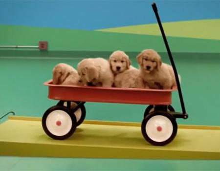 Sevimli köpeklerle çalışan Rube Goldberg düzeneği