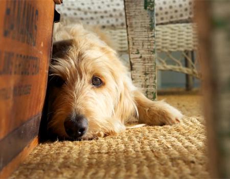 Dog TV köpeklerin sıkıcı hayatlarını daha eğlenceli kılmayı hedefliyor.
