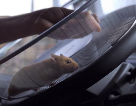Volvo viral serisine 'Kaptan Hamster' ile devam ediyor