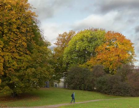İsveçli dernekten ağaçsız hayatın resmi