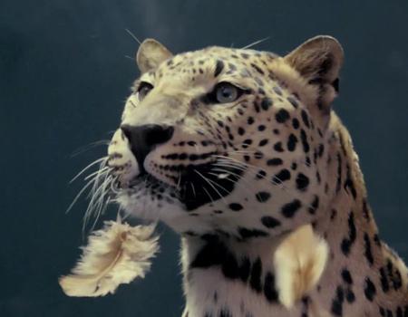 Jaguar'dan Mercedes'in tavuklu reklamını tiye alan parodi