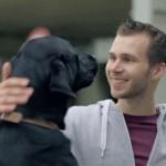 Hollandalı vakıf, özel eğitimli köpeklerin tüm engellilerin hayatlarındaki yerini hatırlatıyor.