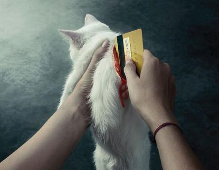 Satın aldığınız her evcil hayvan bir diğerinin ölümüne sebep olur