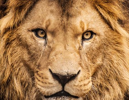 Cannes Lions jüri başkanlarını açıkladı