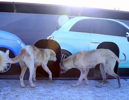 Fiat'tan hayvan barınağına dönüşen billboard'lar