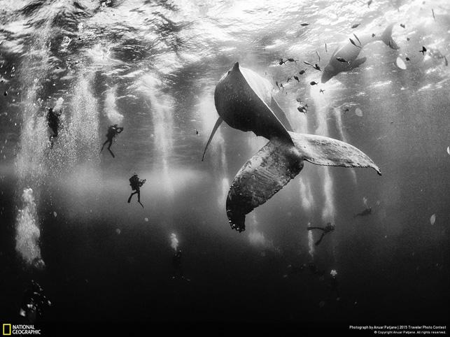 National Geographic Traveler Fotoğraf Yarışması 2015: Whale Whisperer