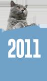 Felis'in zaman tünelinde yolculuk: 2011