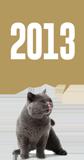 Felis'in zaman tünelinde yolculuk: 2013