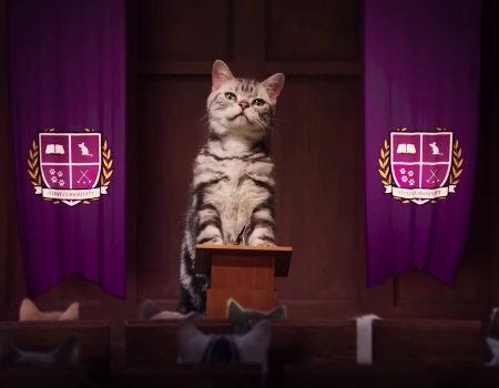 Kedi akademisi'nde ders başladı