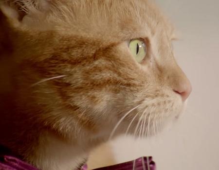 Finans aleminin üçüncü gözü Kedi Sezai