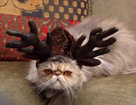 Kedinize bir özür borçlusunuz