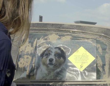 Sahipsiz arabalar mı, sahipsiz hayvanlar mı?