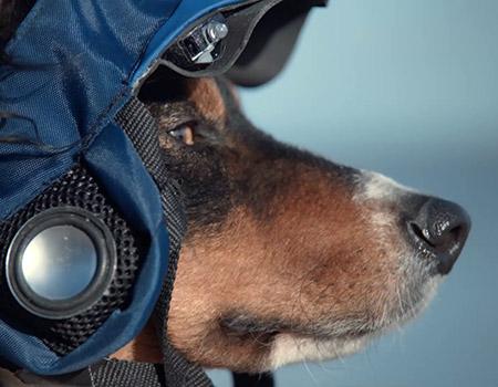 Volkswagen'den köpeğinizi gezdiren uygulama