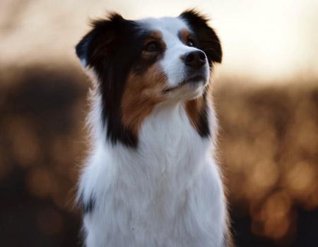 Borç batağında bir köpek