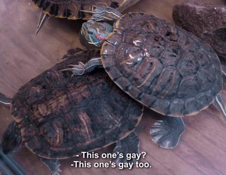 Can dostunuz ya eşcinsel çıkarsa?
