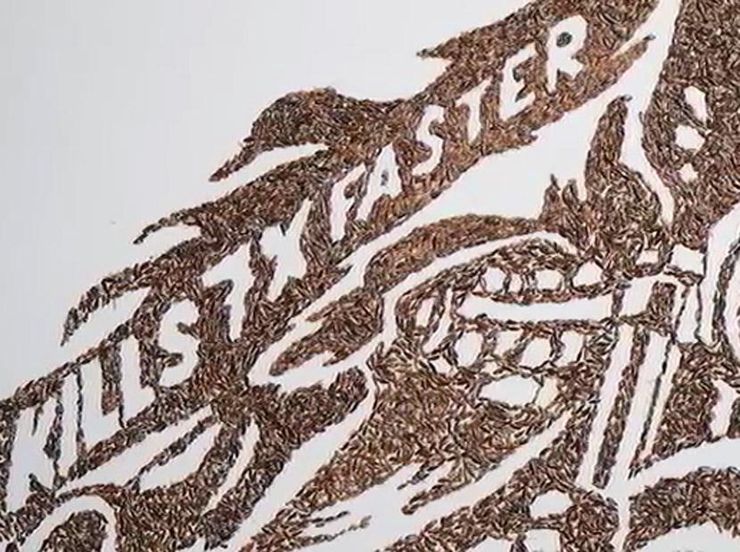 Ölü böceğe ağıt: Hamamböceği sanatı