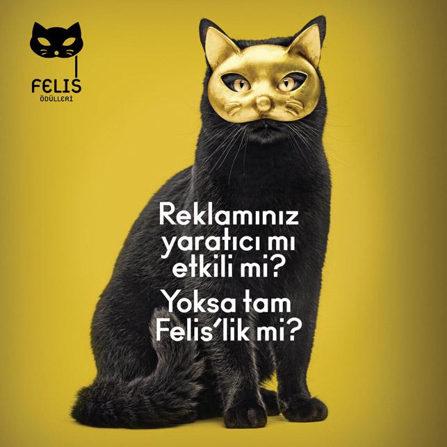 İşiniz tam Felis'lik, peki ya kediniz?