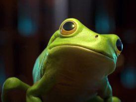 Bir tutam kurbağa hüznü
