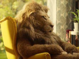 Rahatlığın keyfi aslandan sorulur