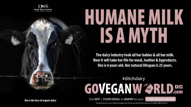 İnsancıl süt sağımı mümkün mü?