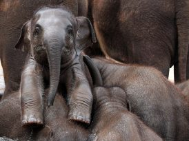"Filler nasıl ""merhaba"" der?"