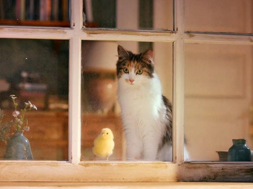 """""""Bir kedi gördüm sanki"""""""