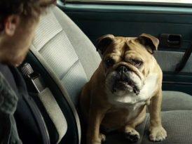 Erkeklerin halinden Bulldog anlar