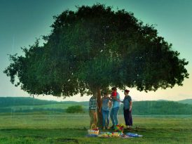 Güvenilecek bir ağaç