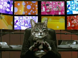 Dünyanın yönetimi kedilerin patilerinde