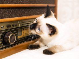 Felis'e göre radyonun en iyileri