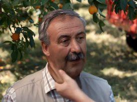 Sahte portakal bahçesine yüzde baskını