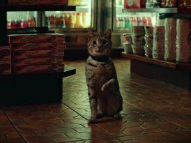 Kim demiş kediler nankör olur diye