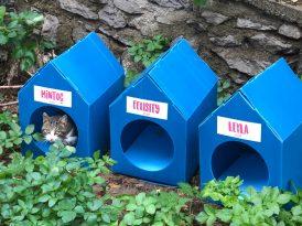 4129Grey'den sokak kedileri için iç ısıtan bir proje