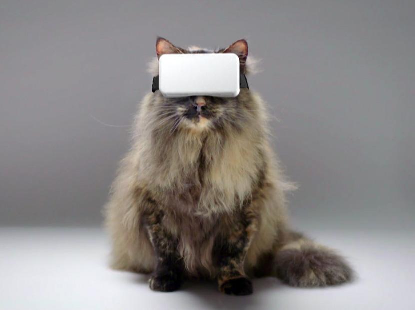 Dijital dönüşümün pençesinde kediler