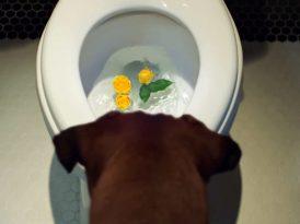 Kıskanç bir köpeğin zaferi