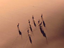 Afrika'nın kanatlı muhafızları