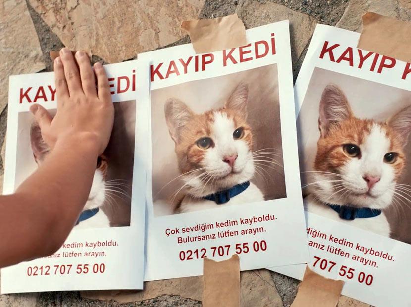 Bir kayıp kedi hikâyesi