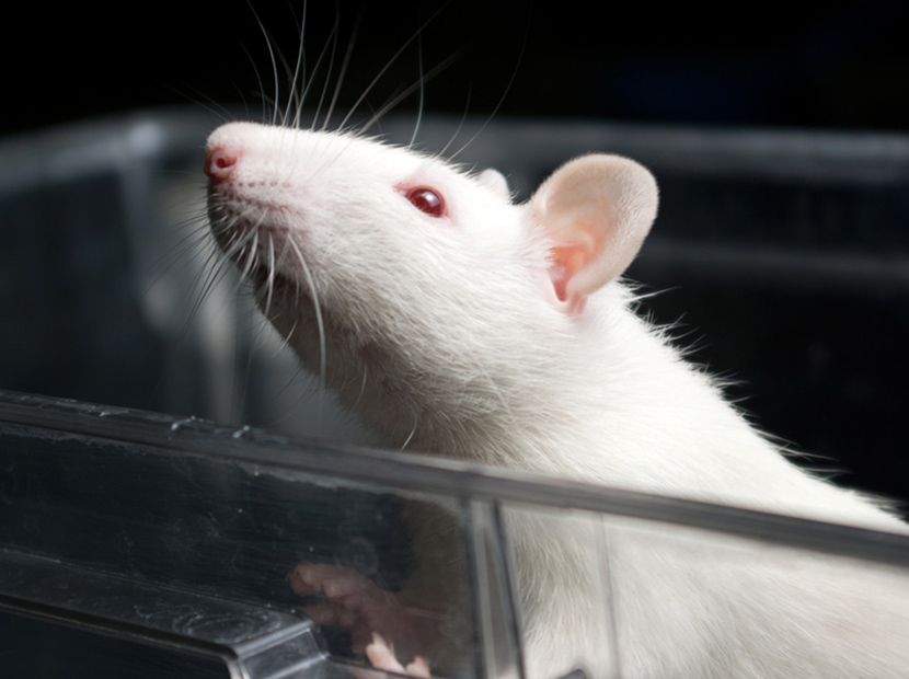 Unilever'den hayvan deneylerini yasaklama çağrısı