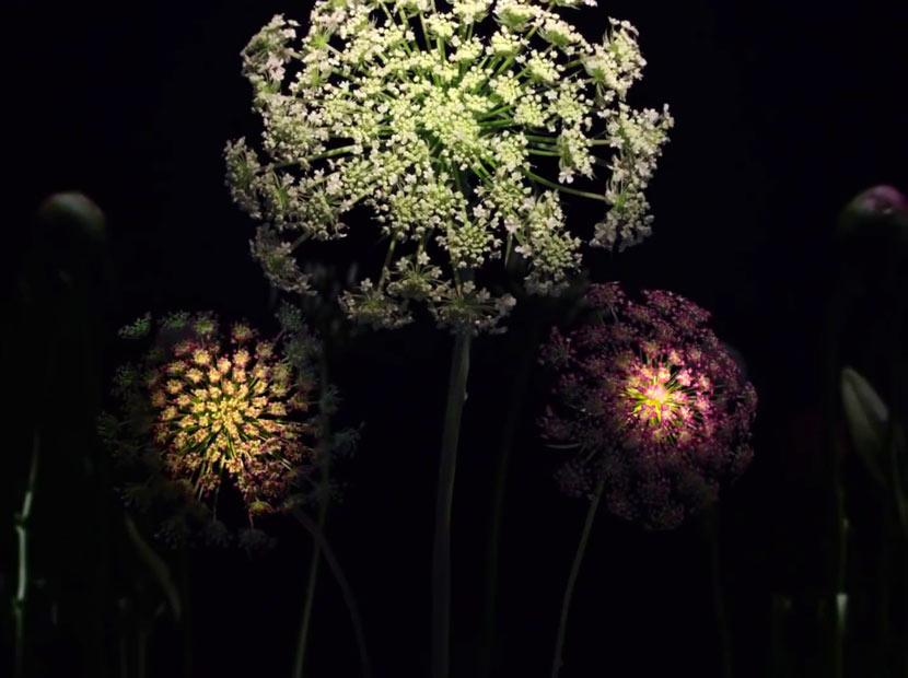 Çiçekler, havai fişekler ve doğa dostu bir teşekkür