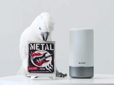 Metal tutkunu bir papağan