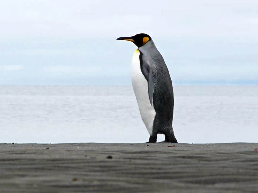Saadet Partisi'nden penguenli mesaj