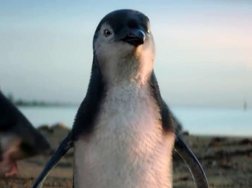Hayallerinin peşinde bir penguen