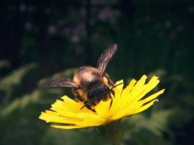 Pornhub'dan arılara yardım eli