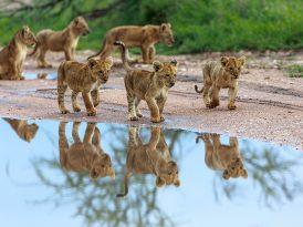 Young Lions Türkiye başvuruları başladı!