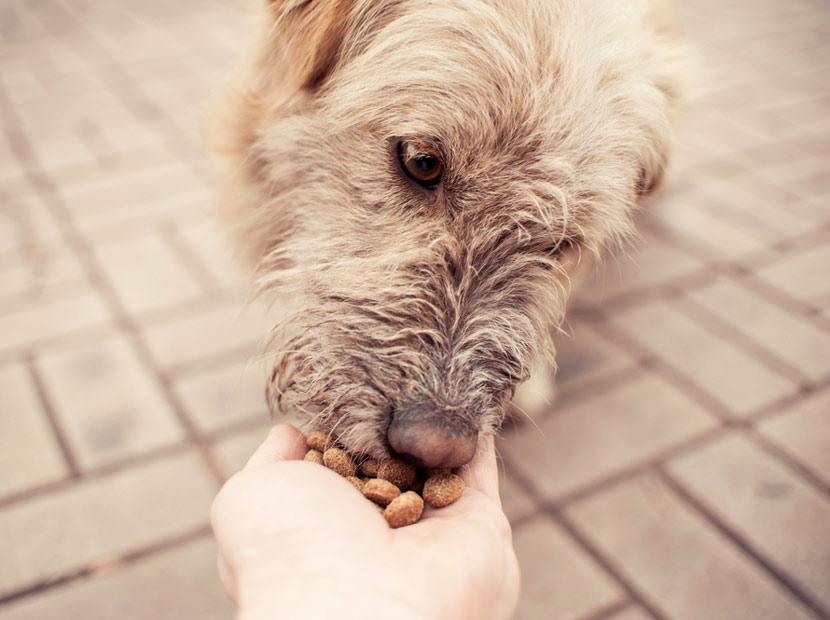 TikTok'tan sokak hayvanlarına destek
