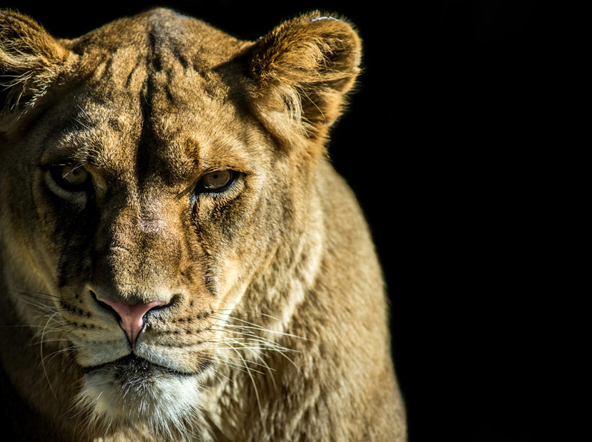 Dişi Aslanların gözünden Cannes Lions ödülleri